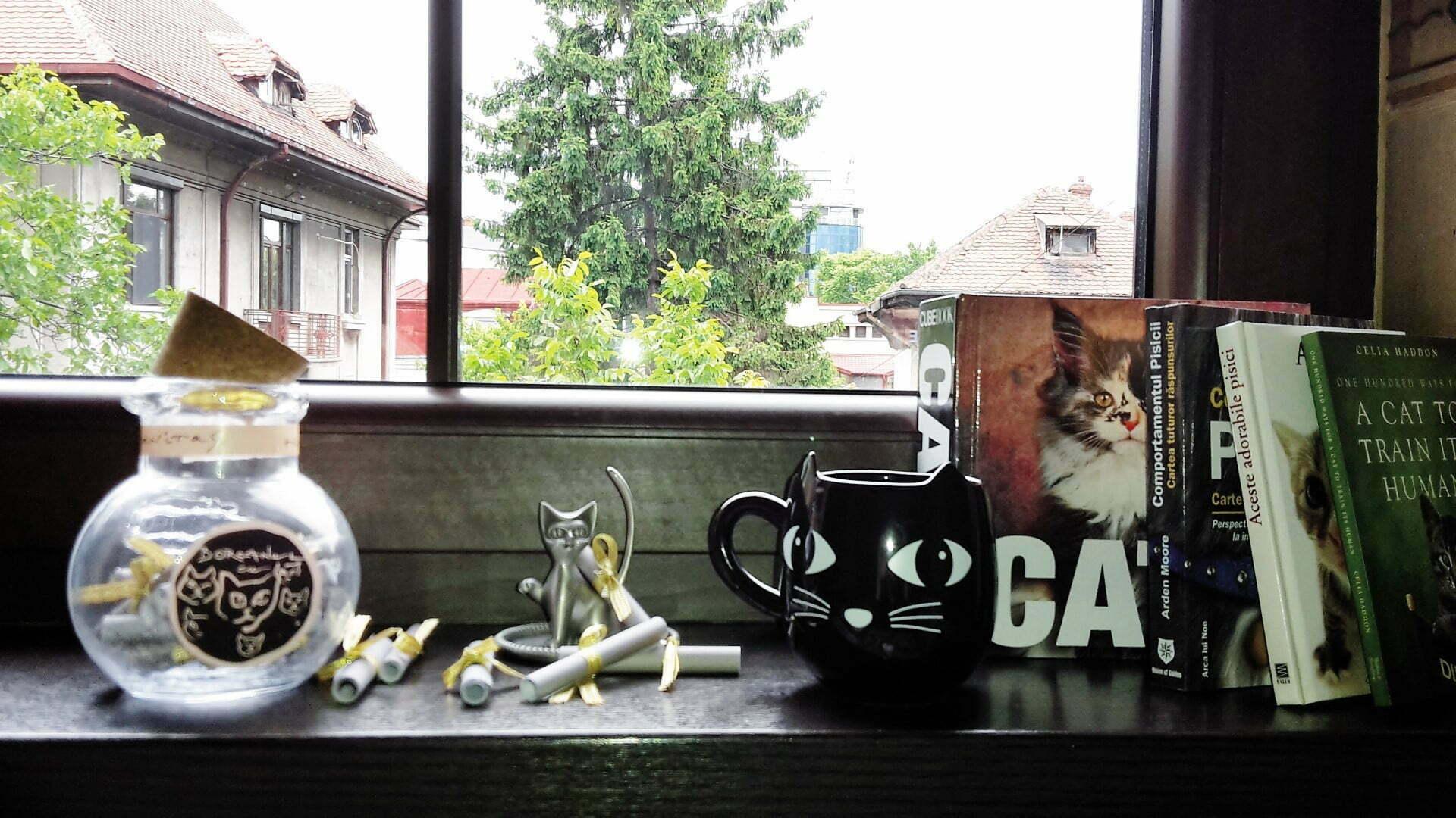 Borcanul cu pisici 1