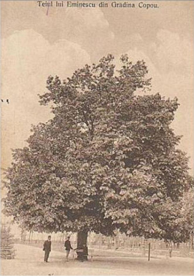Eminescu's_Linden_Tree_(arhival_image)