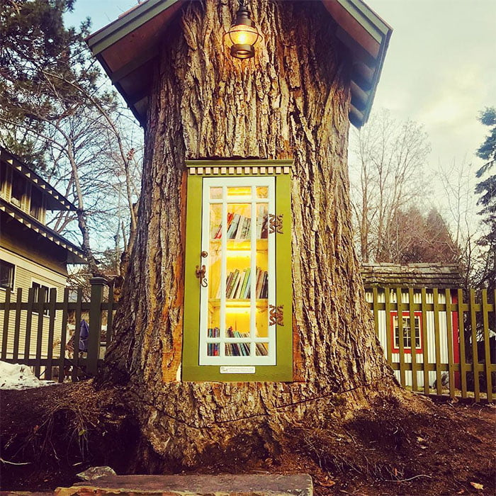 dead-tree-little-free-library-sharalee-armitage-howard-29